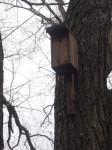 Vyvěšování hnízdních budek a polobudek 122