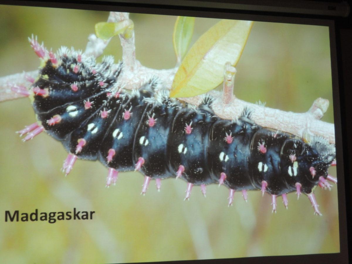Schůzka – společná – beseda o motýlech v knihovně i pro veřejnost